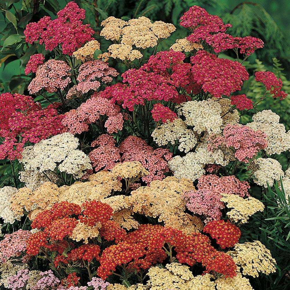 виды многолетних цветов фото переместил другой