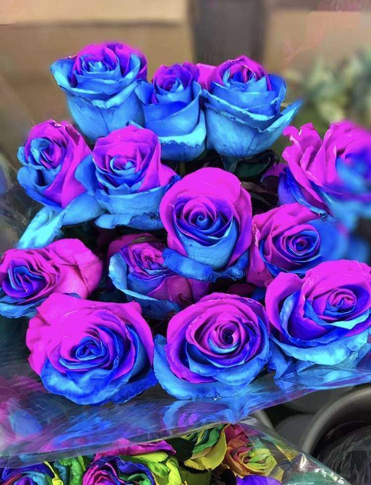 Картинки много синих роз