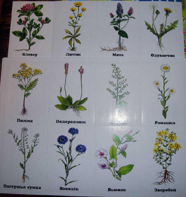 растения леса беларуси в картинках с названиями фотостудии егорьевска карте