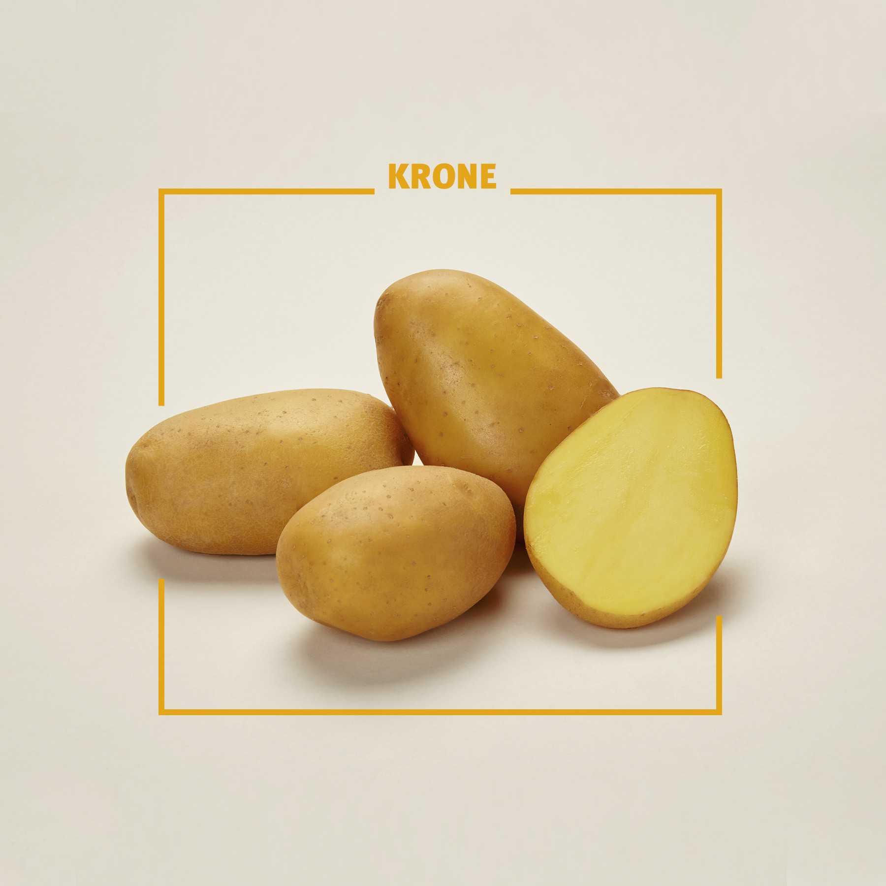 что картофель крона описание сорта фото отзывы этот день