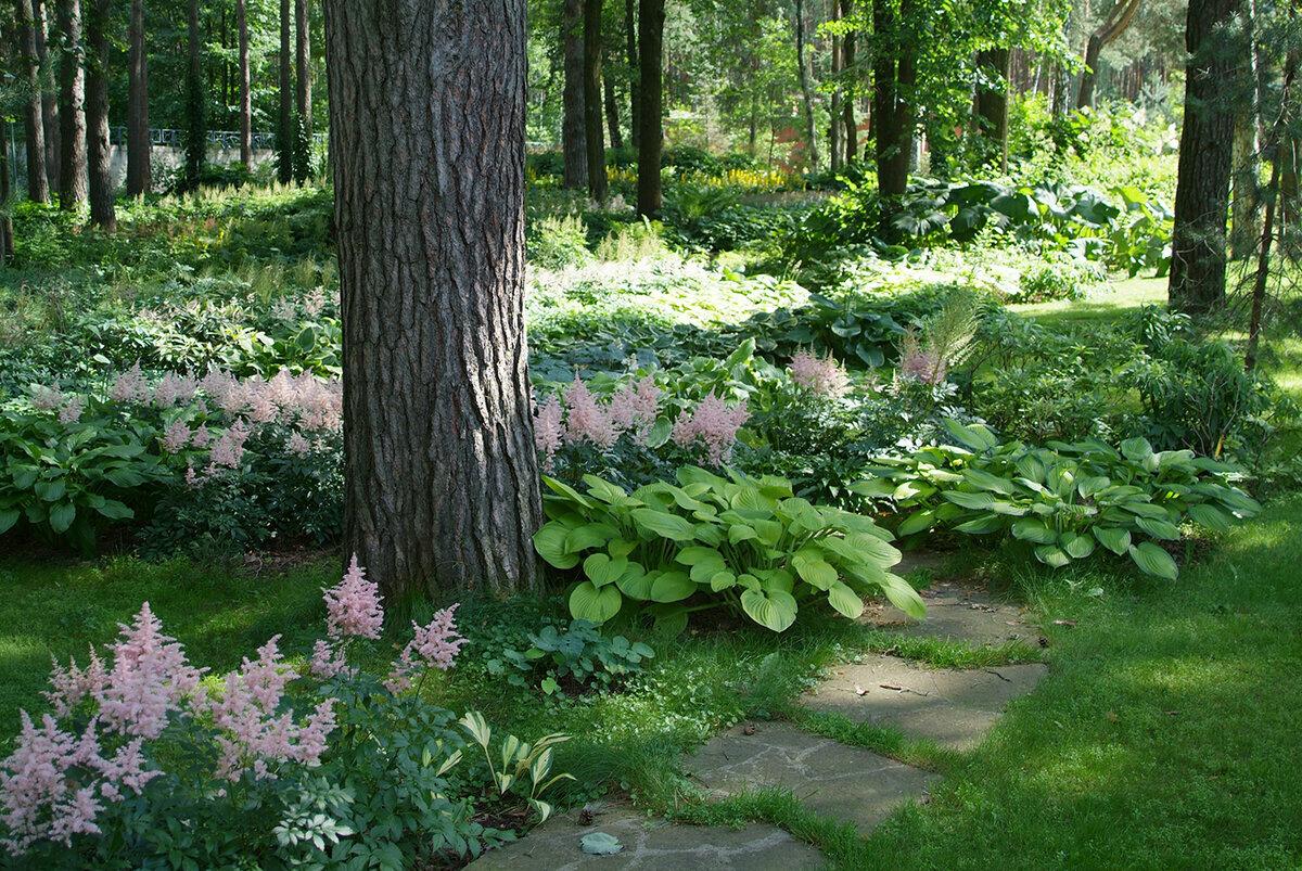 Тенелюбивые и теневыносливые растения для дачи: названия цветов и кустарников, какие овощи посадить в тени и полутени, примеры (25 фото)