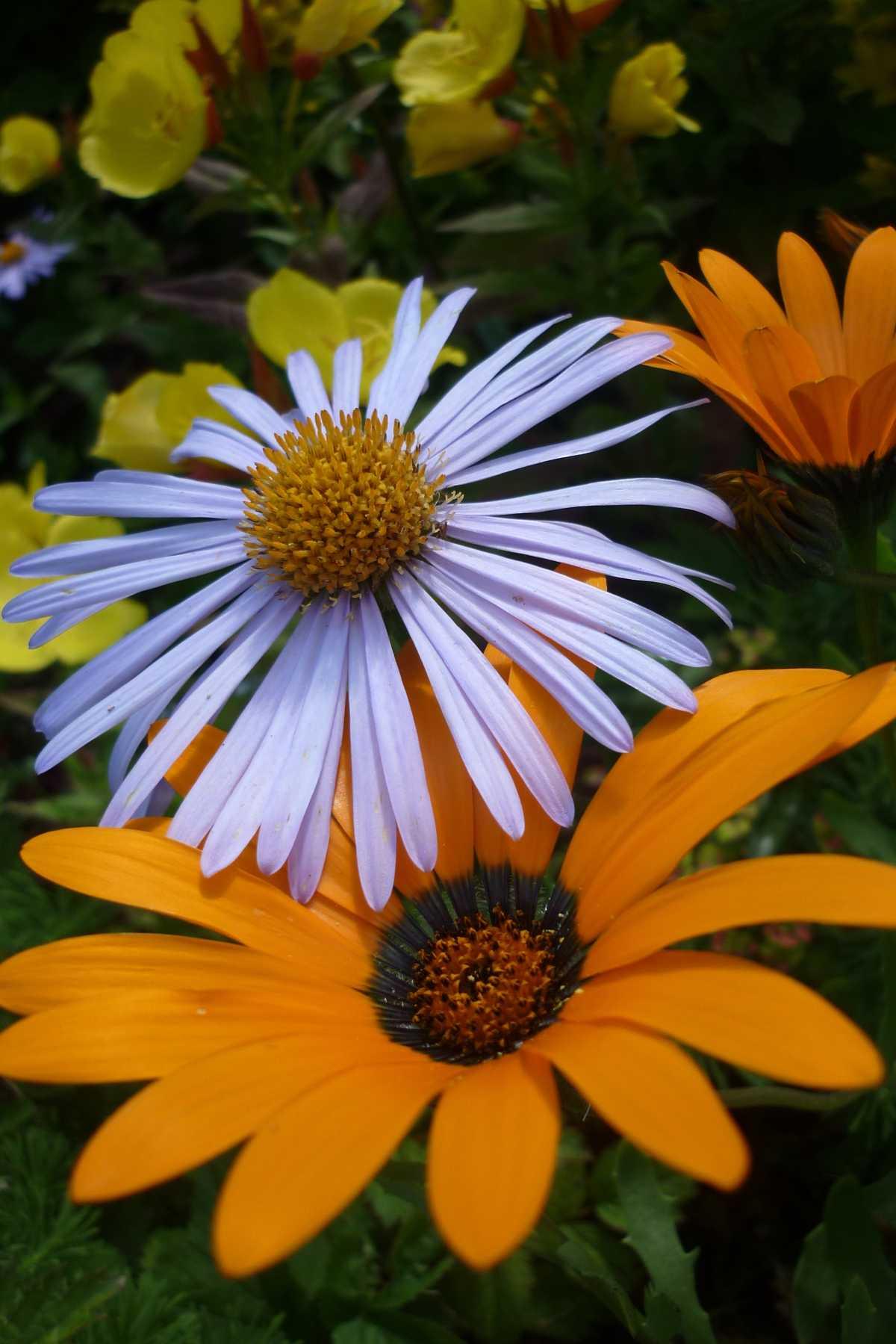 Движущиеся картинки для презентаций цветы вид деятельности