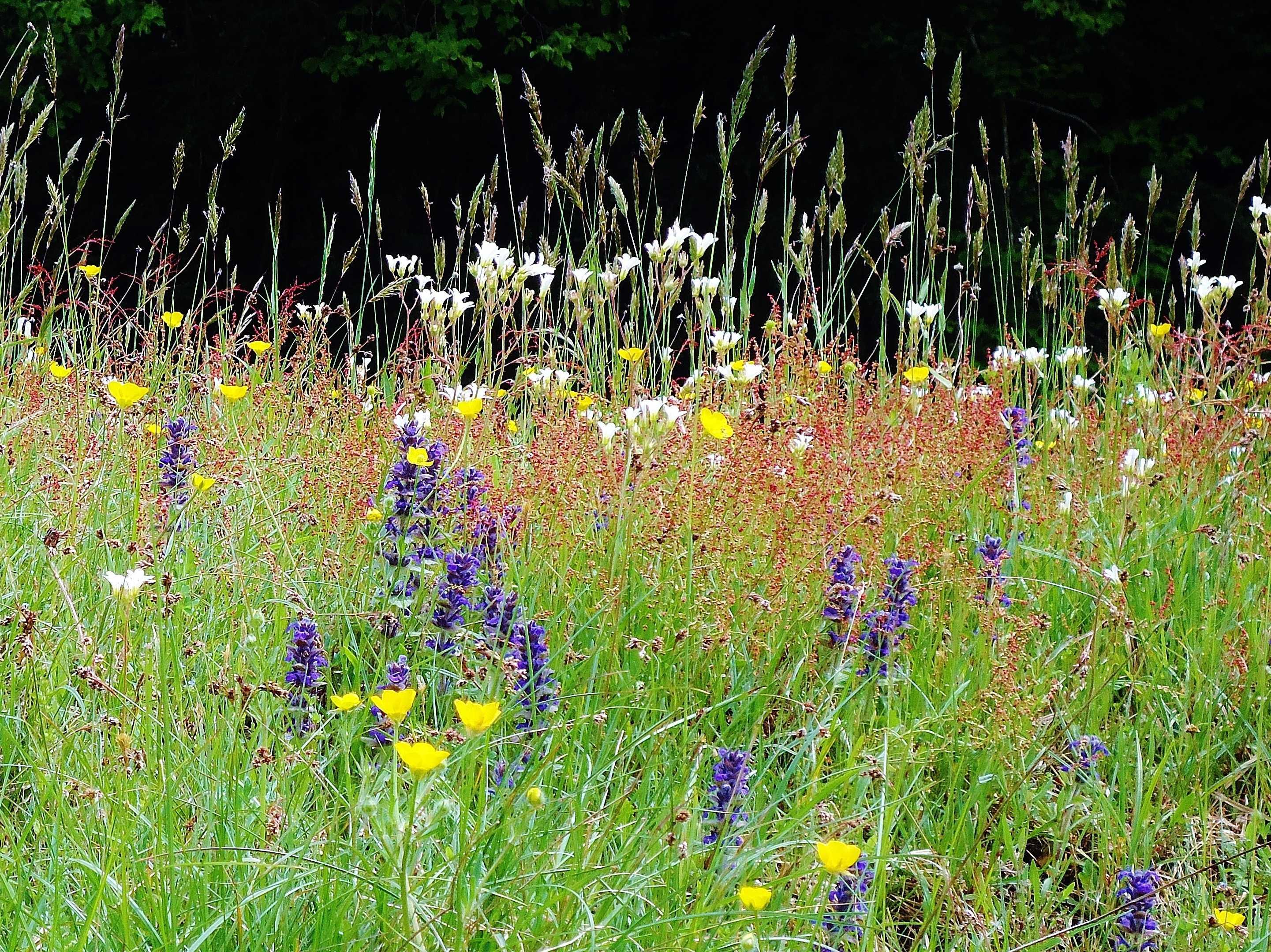 данном фото луговые цветы растения россии это