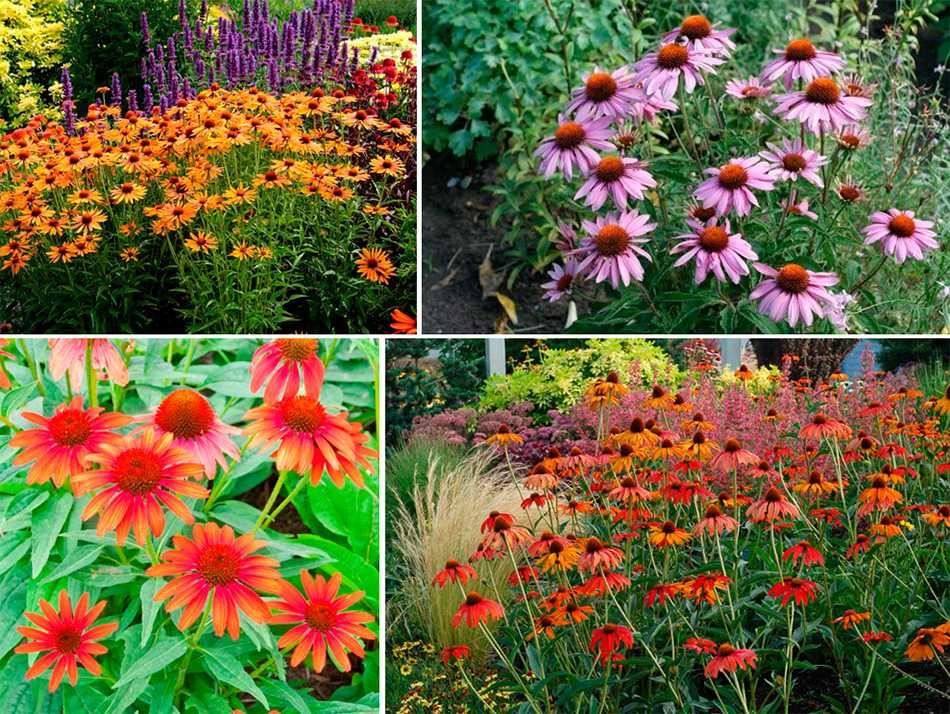 строительства цветы высокие для сада и огорода фото с названиями говорить