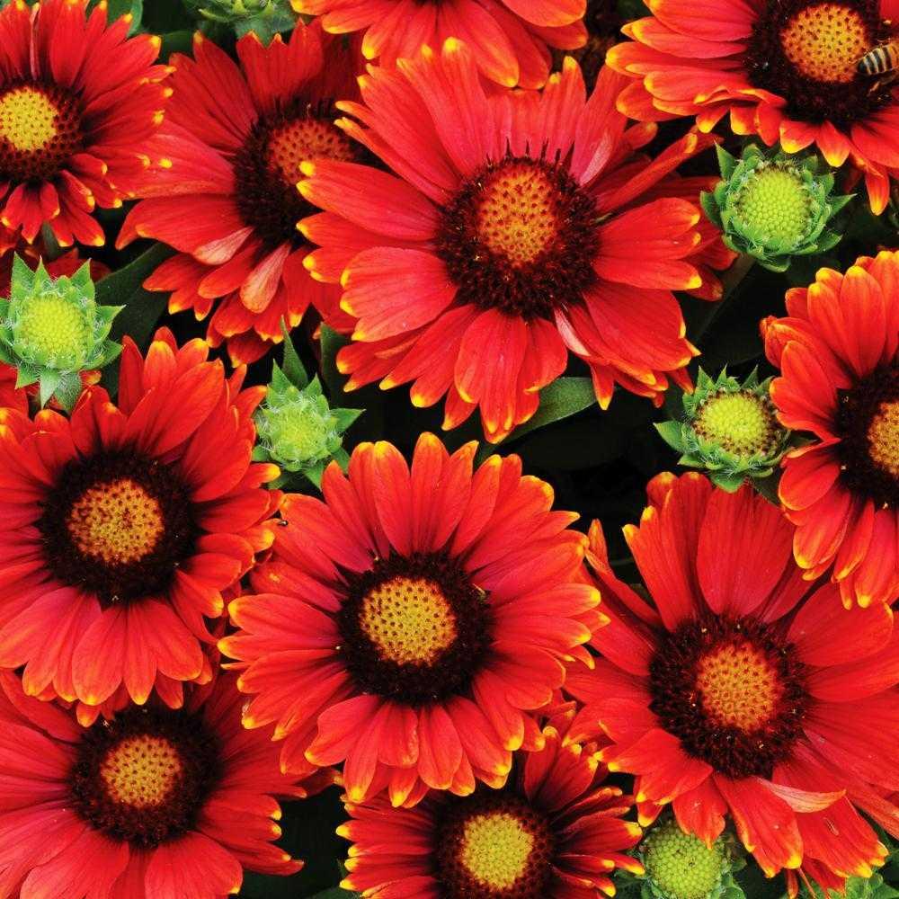 виды многолетних цветов фото получать прогноз
