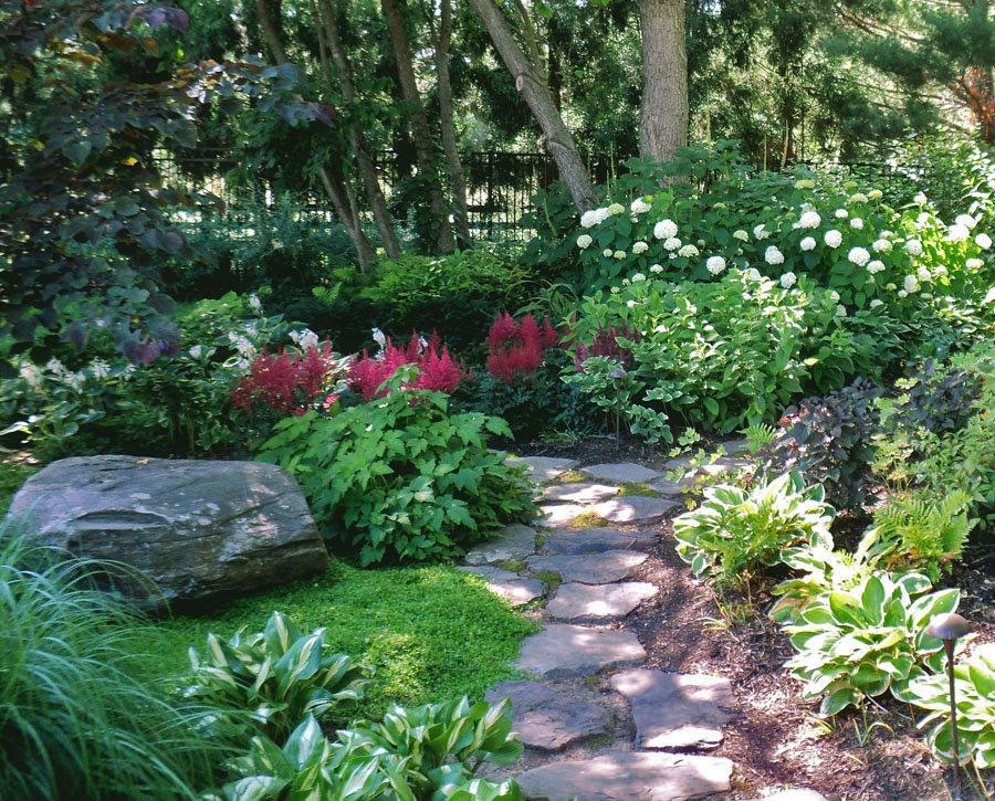 Тенелюбивые кустарники и деревья для сада.