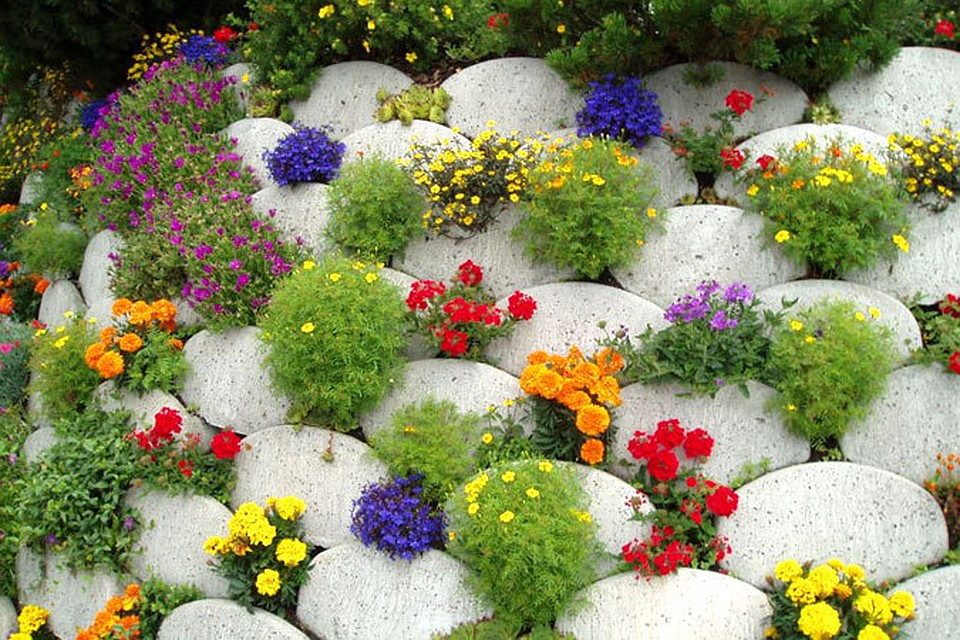 Цветущие травы луговые моск обл фото название такого