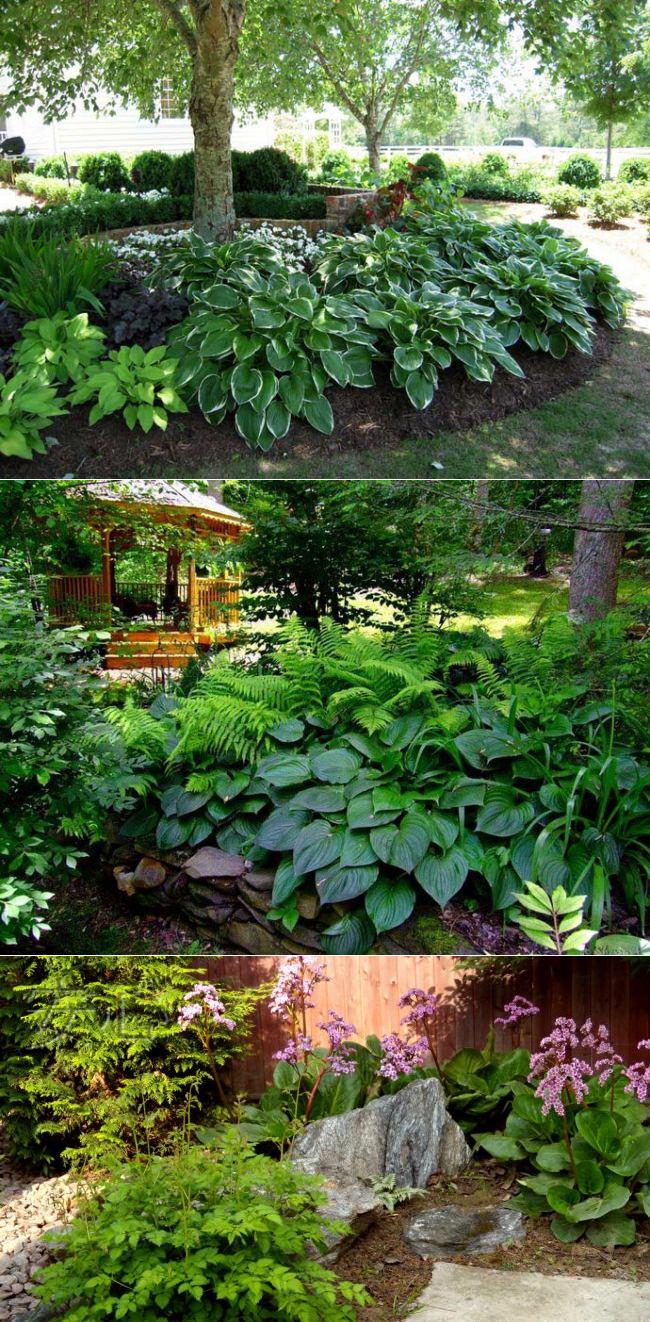 Какие плодовые деревья и кустарники можно сажать в тени