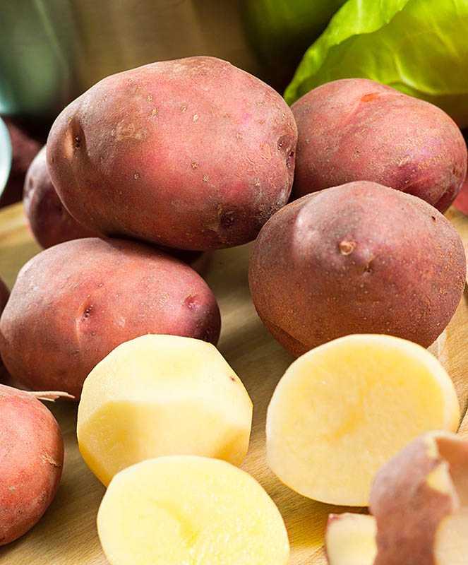 картофель каменский описание сорта фото один специалист