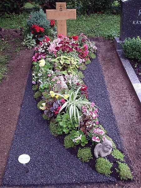 Какие растения можно садить на кладбище, а какие цветы, не нужно сажать на могиле