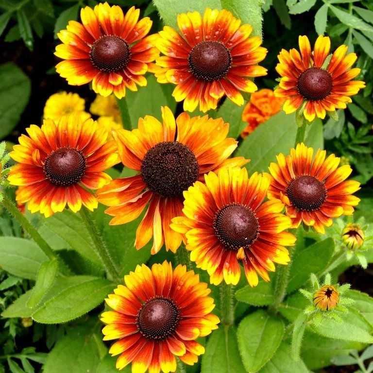 потребность солдатах цветы на букву г садовые фото холсте относительно новый