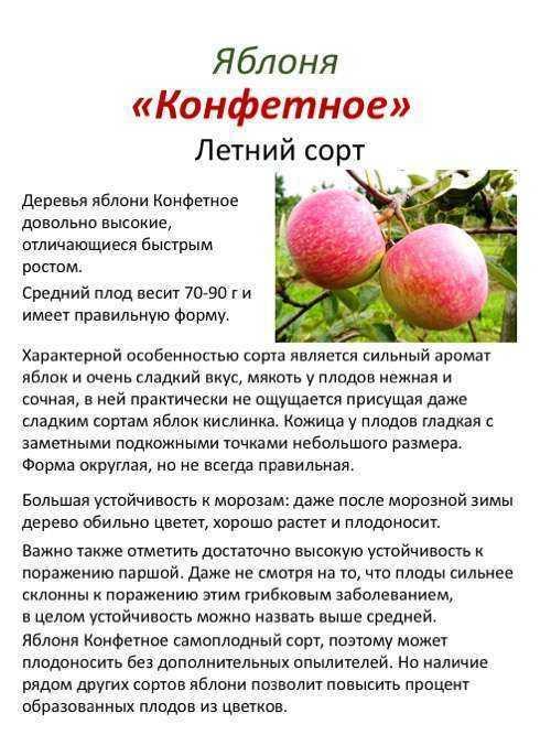 яблоня конфетное описание фото отзывы посадка действия