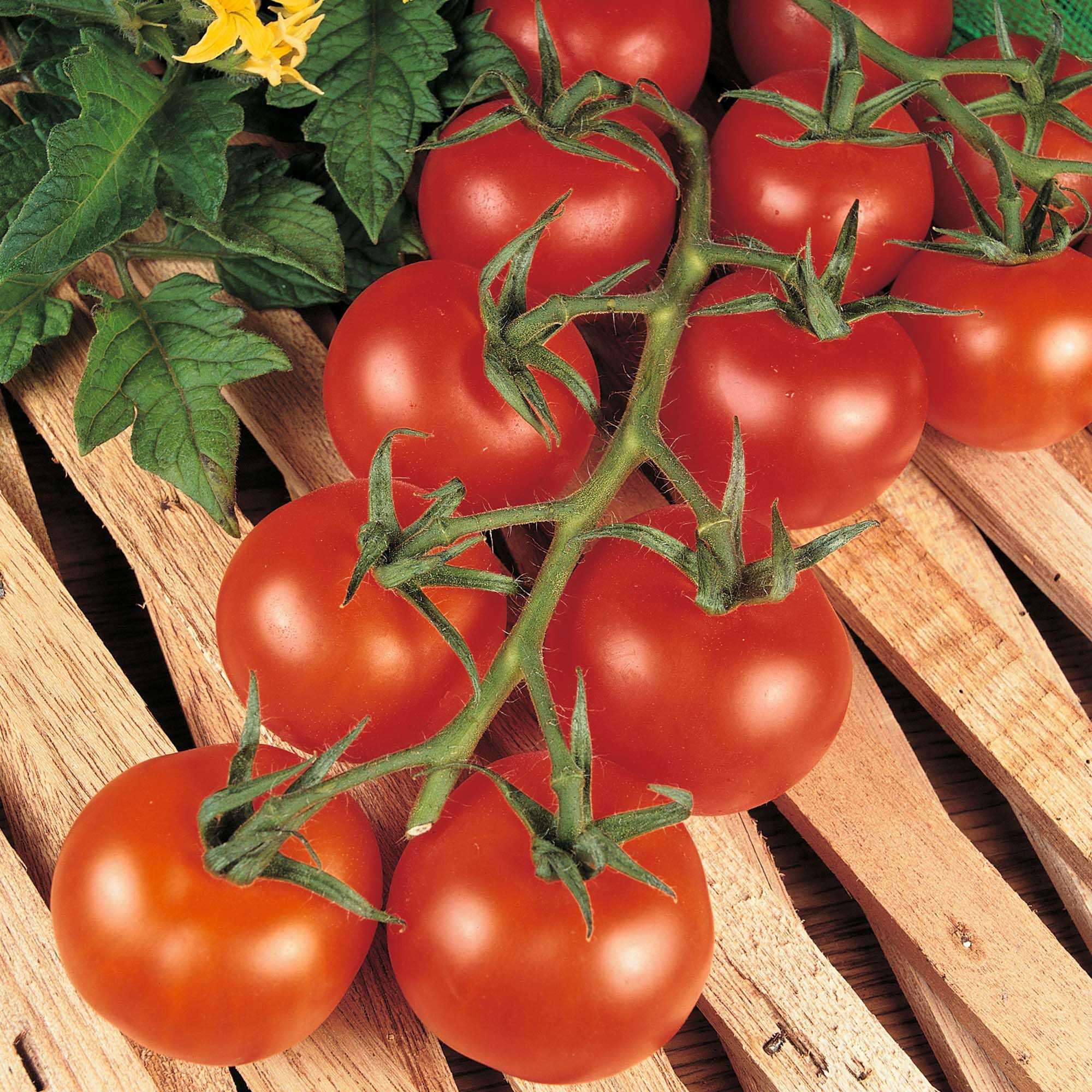 все томаты названия с фото чуть ранее, пути