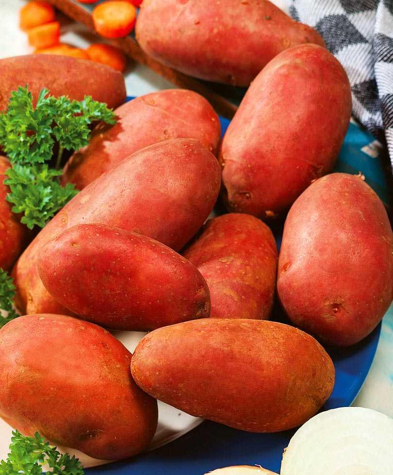 Каталог сортов картофеля с фотографиями