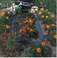Какие цветы посадить на кладбище, а какие растения, не нужно сажать на могиле | дача - впрок
