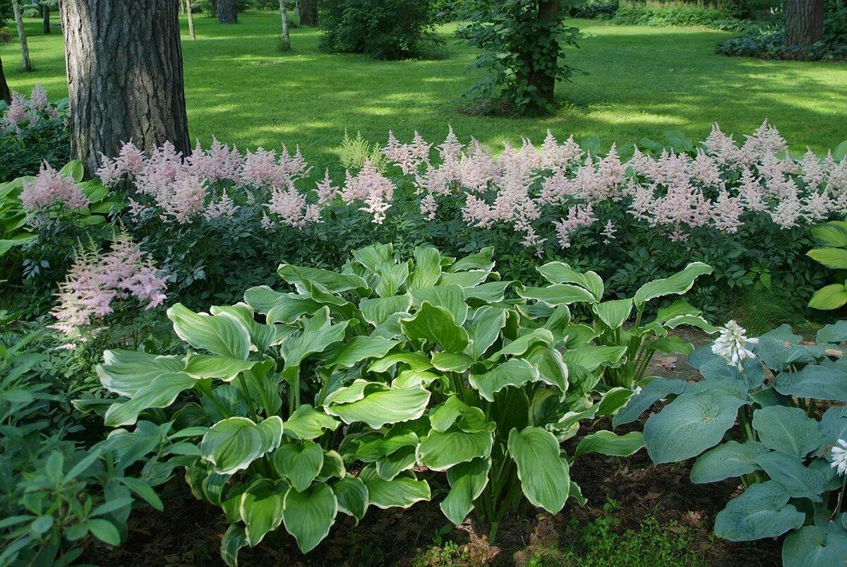 Самые тенелюбивые и теневыносливые растения для сада: кустарники и цветы