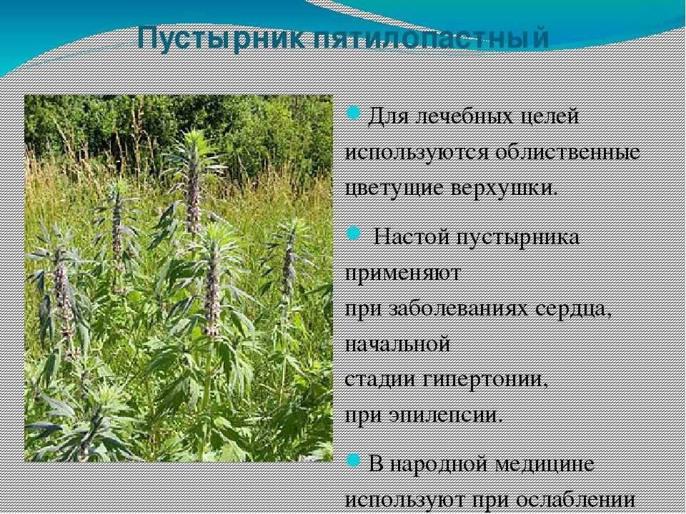 Травы оренбургской области фото и названия