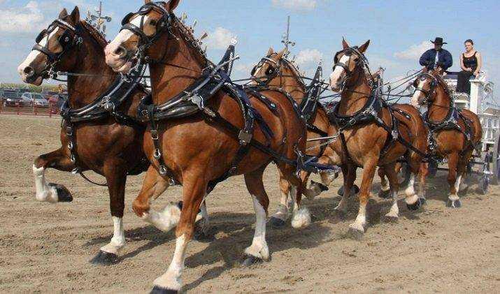 шпунт для лошади