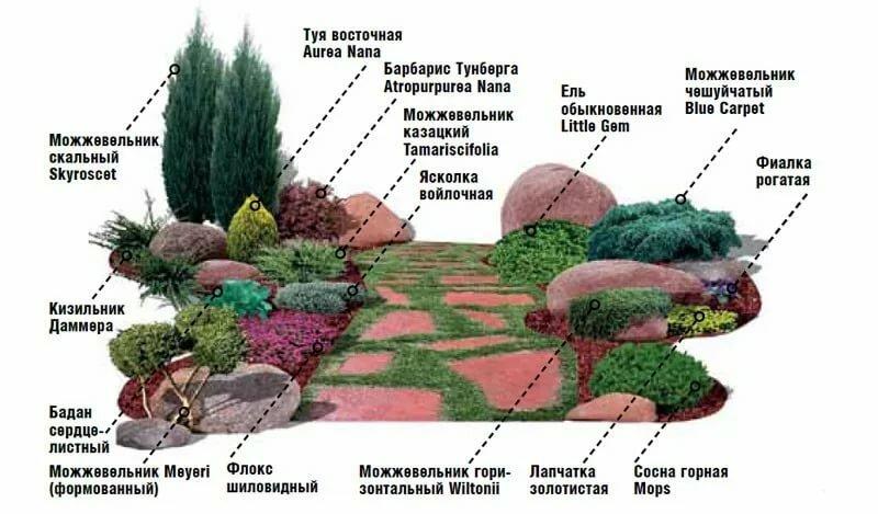 Готовые схемы клумб можжевельника с другими цветами и растениями