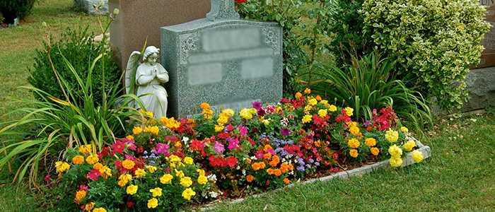 Какие многолетние цветы можно посадить на кладбище: фото