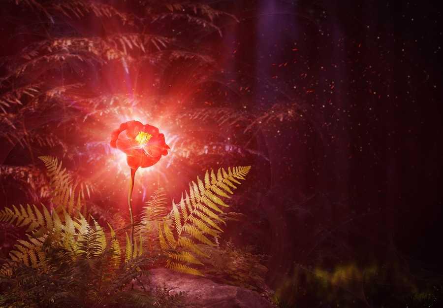 Как цветет папоротник фото лесной ночью