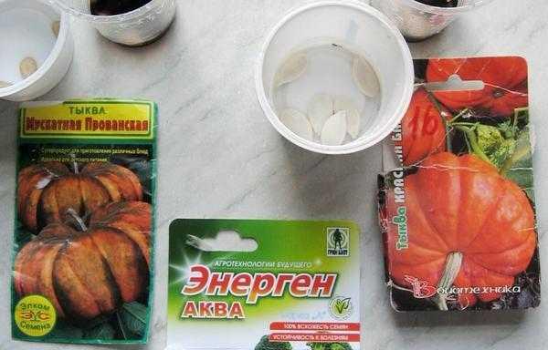 как правильно замочить семена тыквы перед посадкой