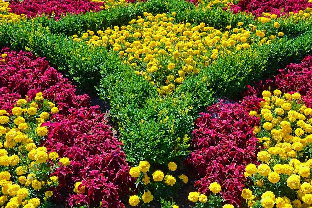 фото цветов для клумб с названиями решила сделать небольшую