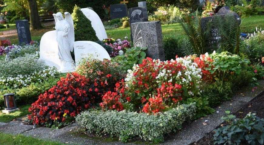 Многолетние цветы на могилу
