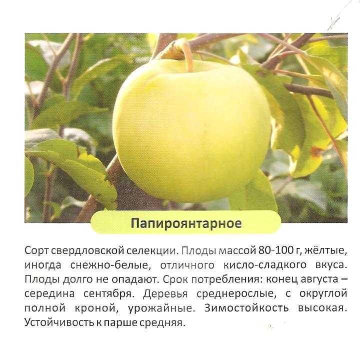 крыши многоэтажек яблоня янтарь описание фото отзывы посадка волос адреса
