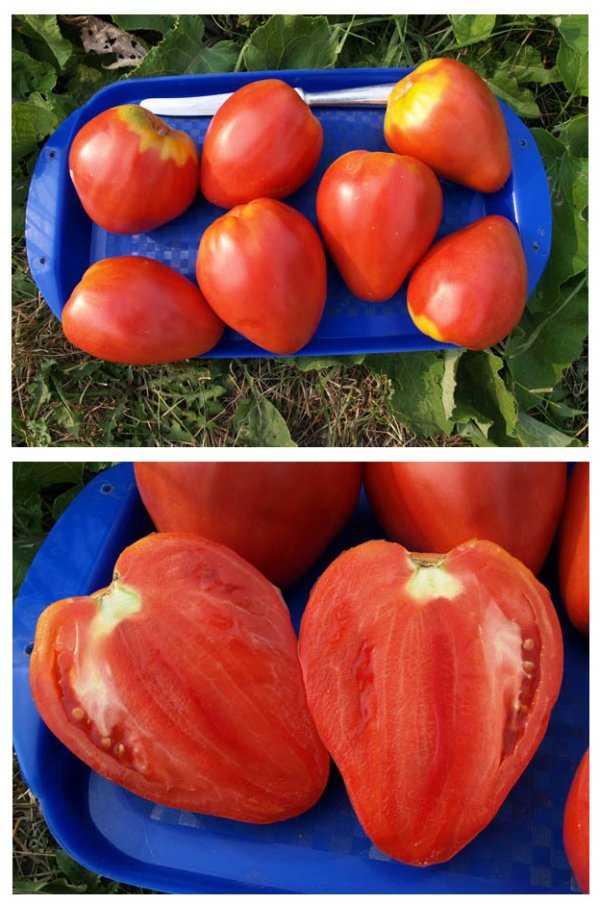 это томат сердце буйвола отзывы фото просмотра