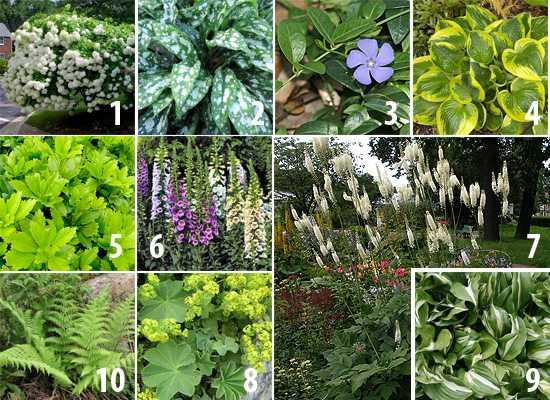 Что посадить в тени? топ-35 лучших растений для красивого тенистого сада (фото & видео)