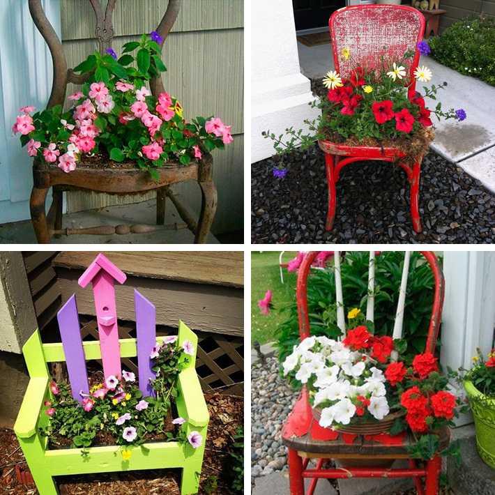Цветы для клумбы цветущие все лето - 85 фото и видео описание применения в ландшафтном дизайне
