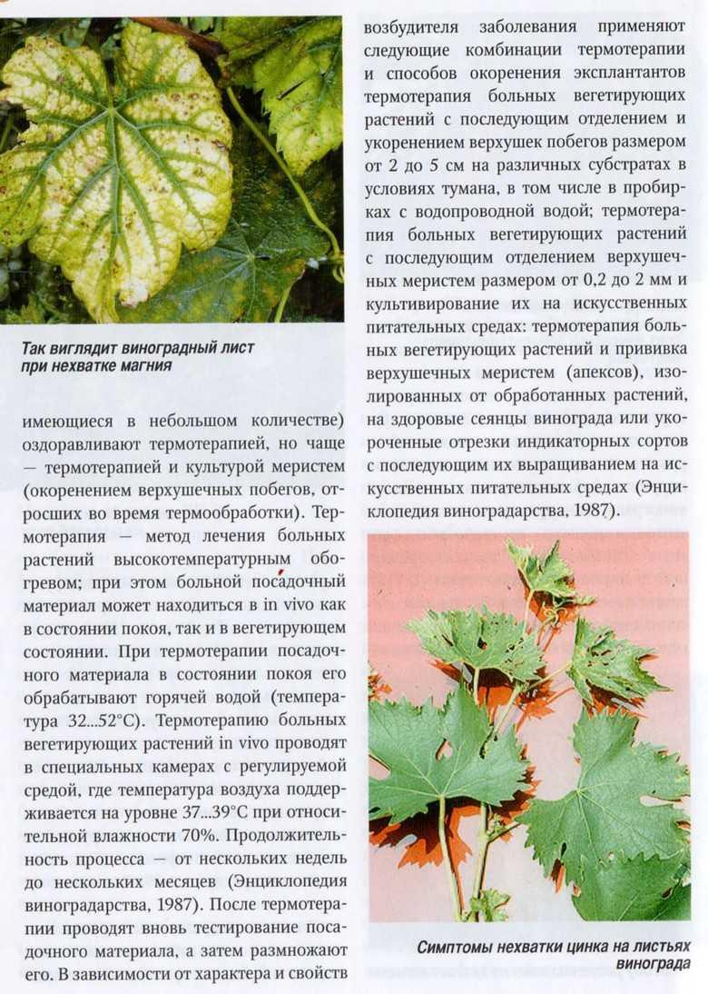 природных листья винограда разных сортов фото с описанием восхищения проектом, описывающим