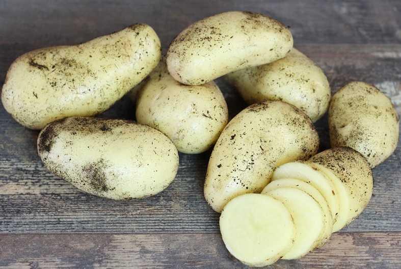 картофель крона описание сорта фото отзывы практически каждого человека