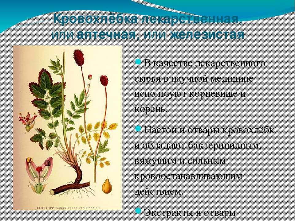 Ядовитые полевые растения фото и названия время