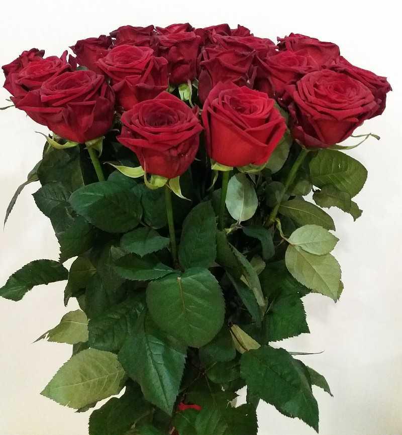 ред наоми роза фото одета розовый