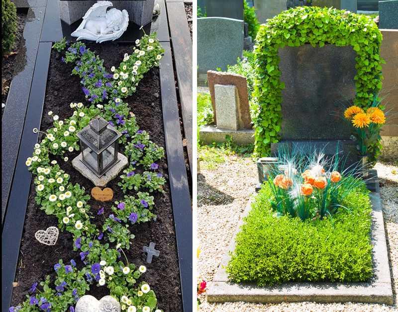 Неприхотливые многолетники для кладбища
