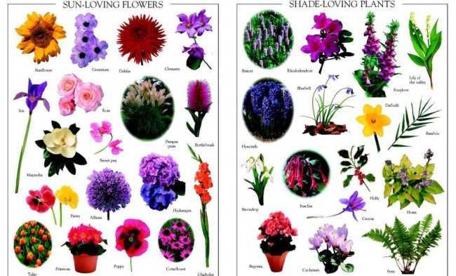 Виды цветов с картинками