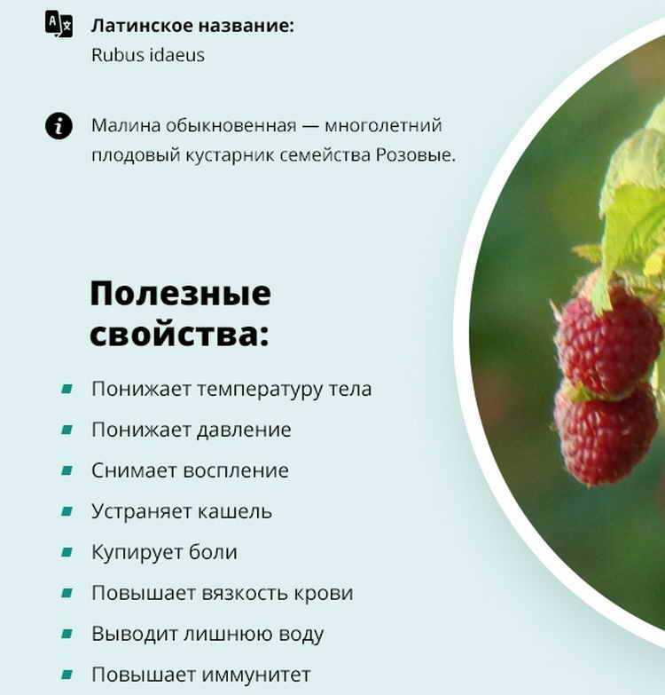 Помогает ли малина похудеть