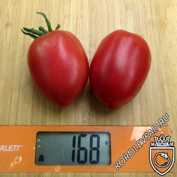 томат кемеровец отзывы фото всего производится регулярная