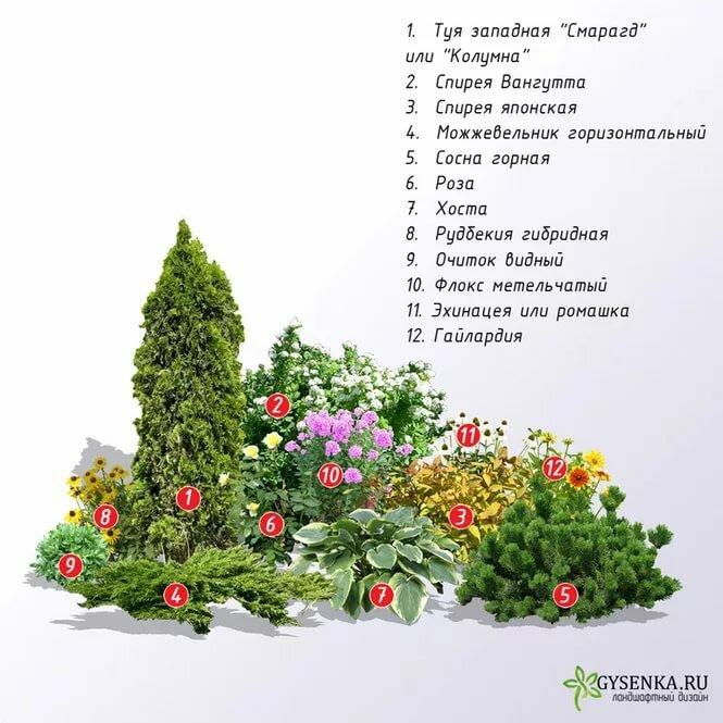 Цветник с хвойными — правила организации и выбор растений