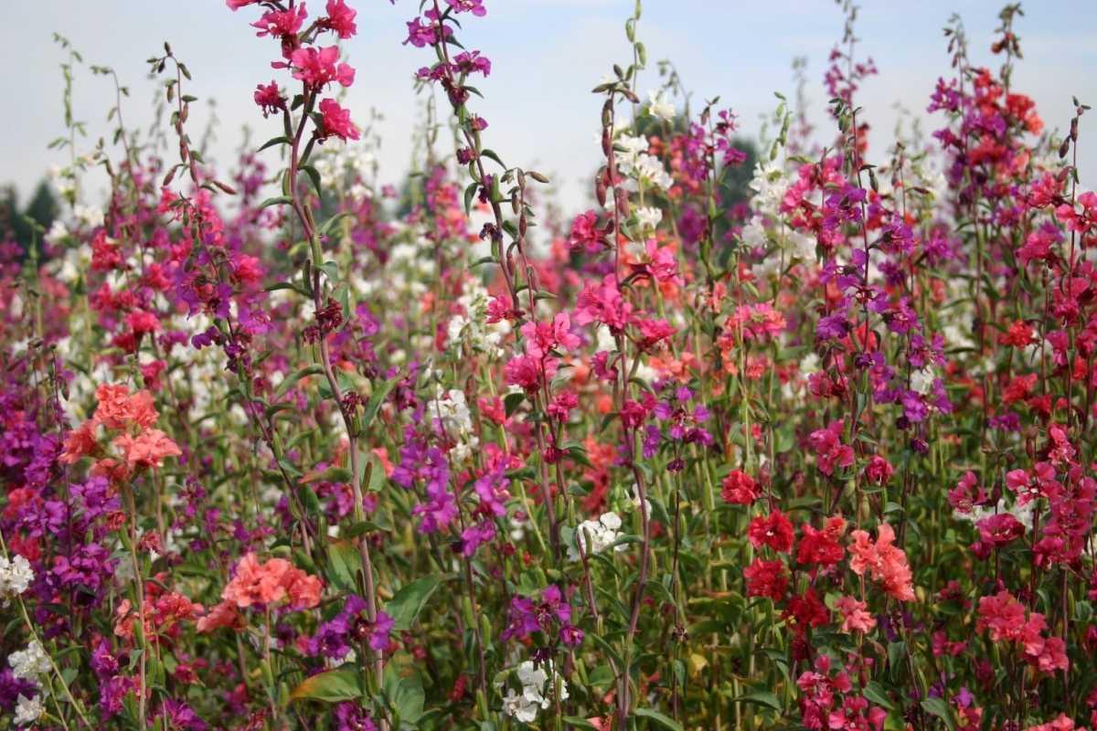Букеты из роз разного цвета фото взрослые