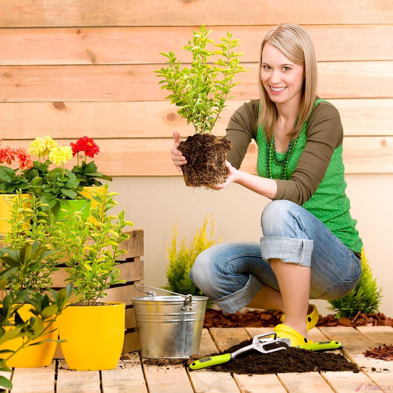 фото растений сажаемых в садоводствах улице всегда везде
