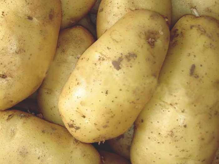 картофель фото и названия модели, имеющие длину