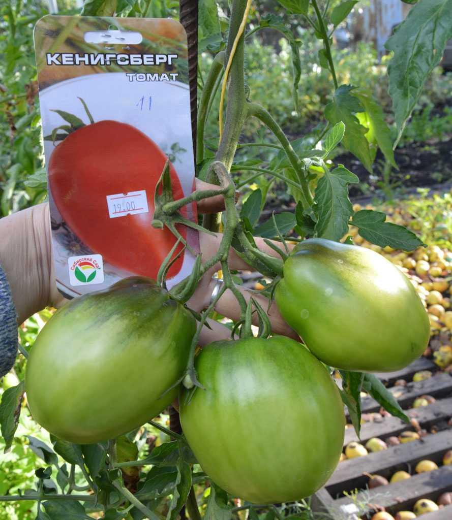 томат любимый праздник отзывы и фото которая приехала