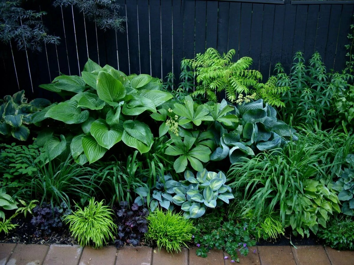 Теневыносливые растения для сада - какие деревья, кустарники и цветы любят тень?