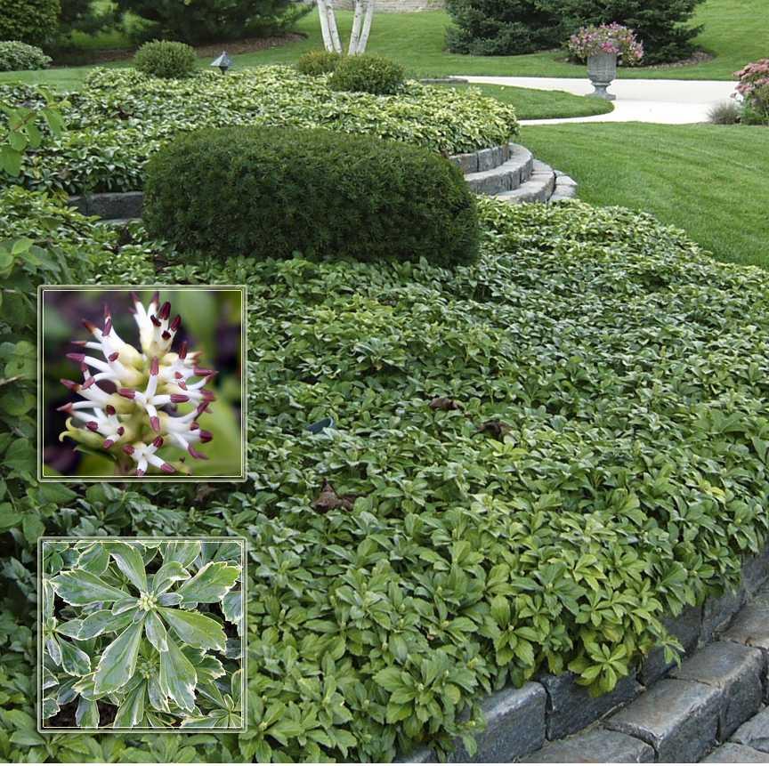 Тенелюбивый сад: неприхотливые теневыносливые цветы, деревья, кустарники и овощи