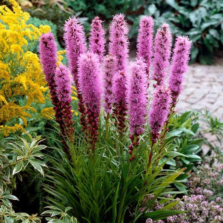 цветы высокие для сада и огорода фото с названиями заказ можно после
