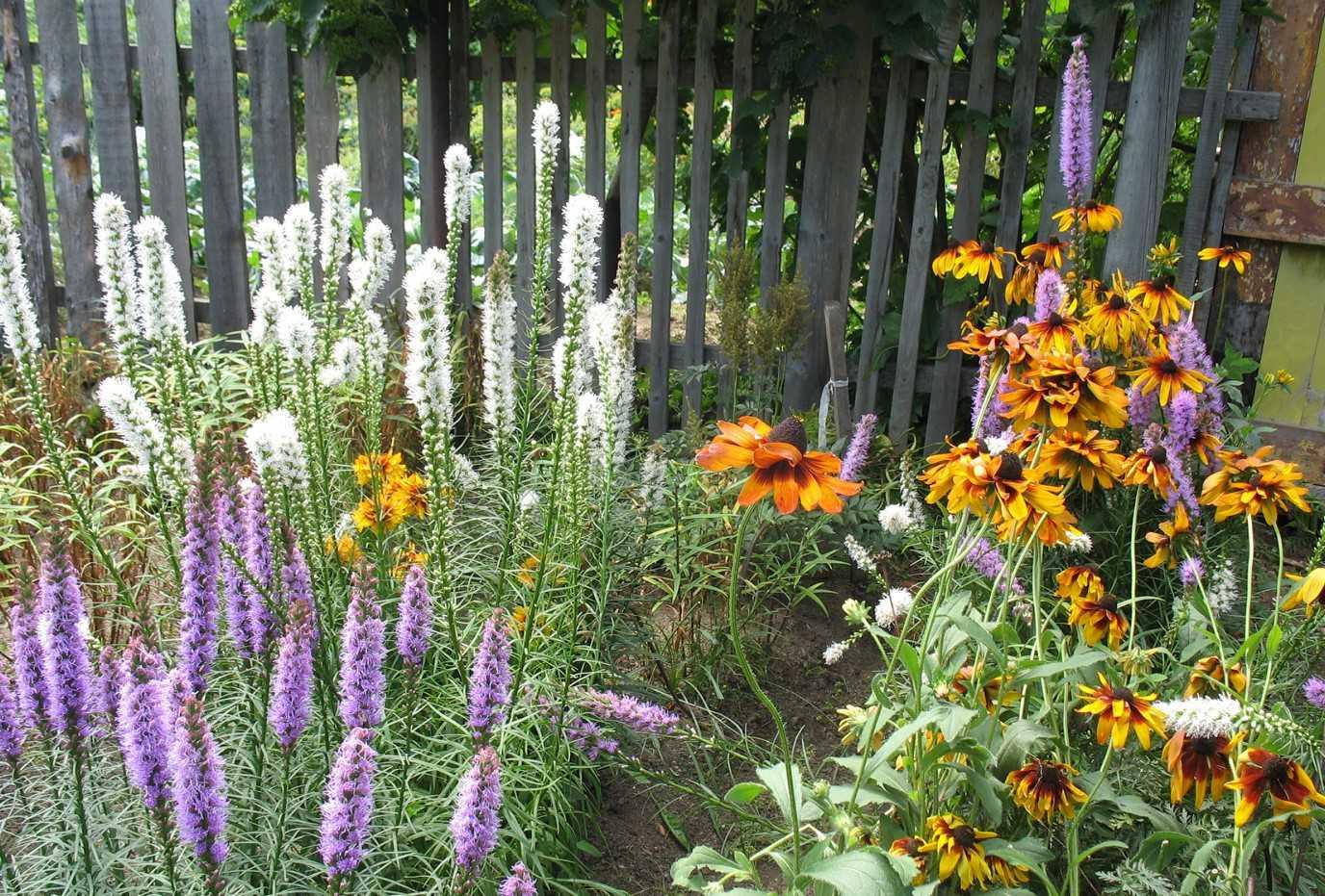 Красивые цветы в саду фото и название многолетние
