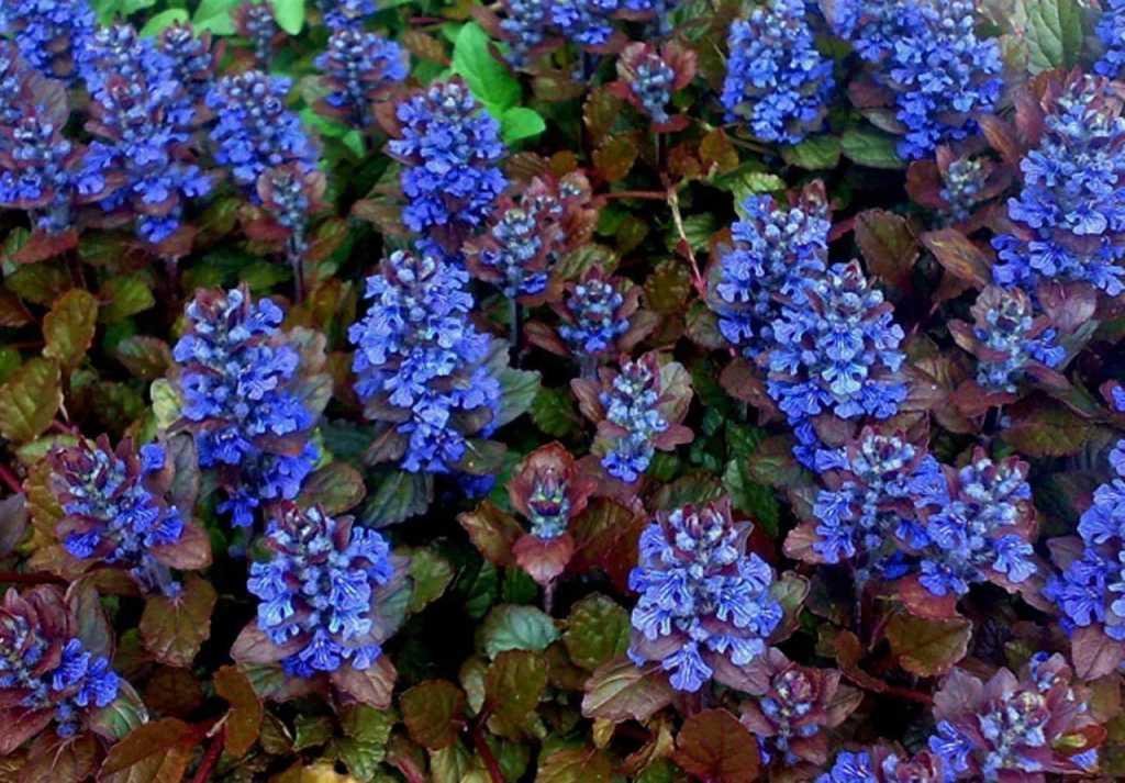 свое фото ползучих цветов и их описание годы работы